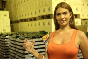 Winemaking in Egypt at El Gouna´s winery