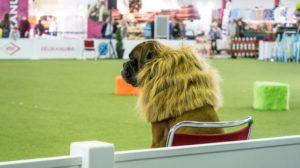 Hund & Katz in Dortmund – Rassehunden, Trick Dogs Revival und Katzen-Weltausstellung