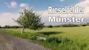 Ein Nachmittag im Naturschutzgebiet in Münster