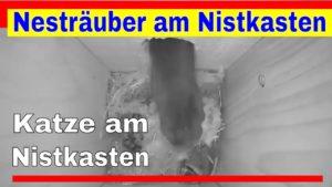 Katze am Nistkasten – Nesträuber in der Nacht
