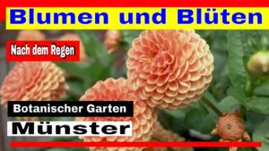 Münster – Blumen und Blüten