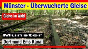 Münster – Überwucherte Gleise im Wald